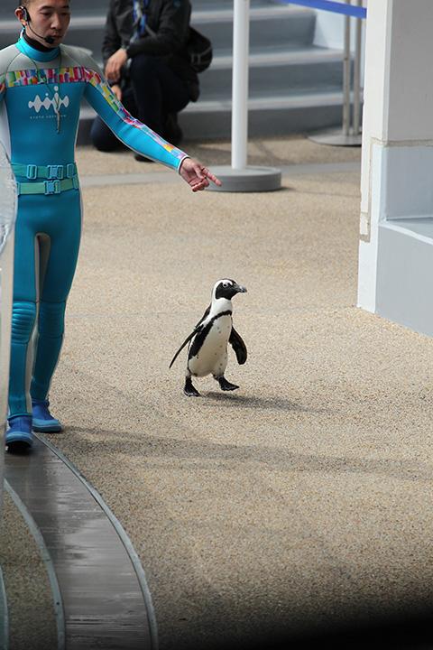 ペタペタペンギン3