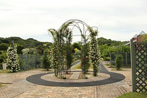花フェスタ記念公園2