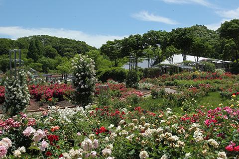 花フェスタ記念公園5